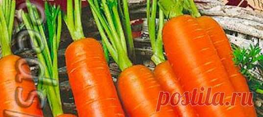 Морковь Принцесса, 2 г Ленивый огород Среднеспелый (100-120 дней от всходов до технической спелости) сорт. Розетка листьев полураскидистая. Корнеплод оранжевого цвета, средней длины до дли...