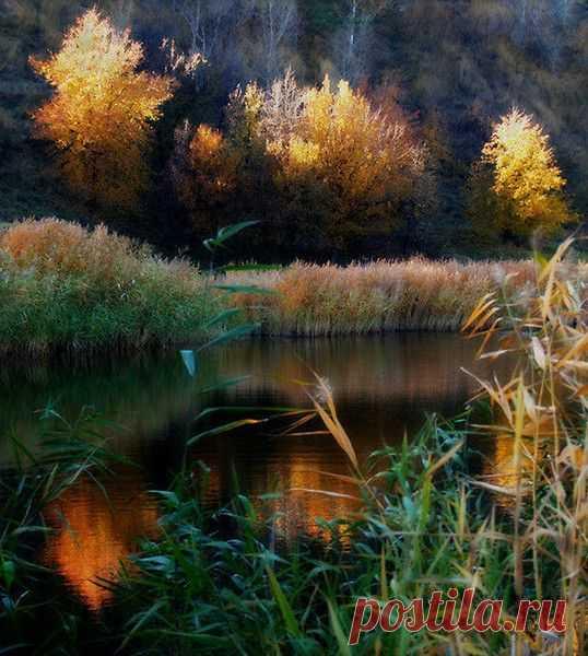 ЗОЛОТАЯ ОСЕНЬ. | Фотографии Olga Ott | 7497 фото