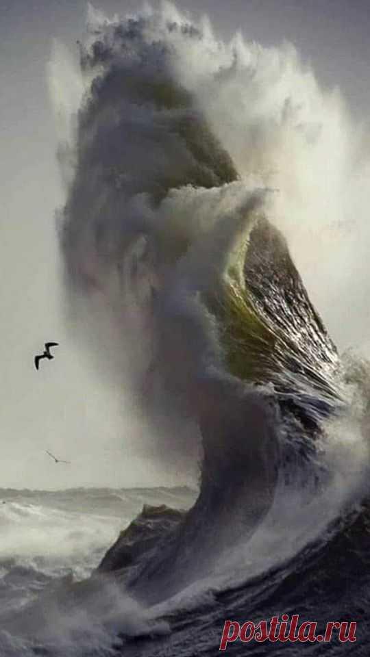 Между тучами и морем гордо реет буревестник, чёрной молнии подобный! Респект Фотографу.