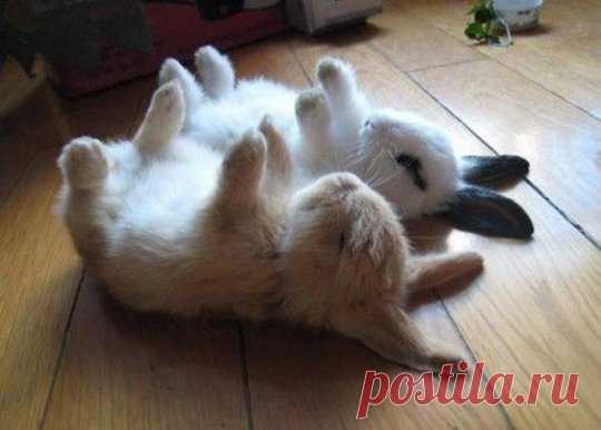 Один кролик ненастоящий
