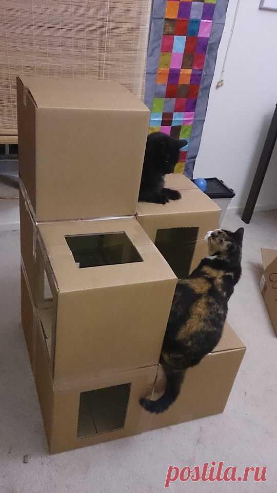 Домик для кошки из картонной коробки и футболки видео
