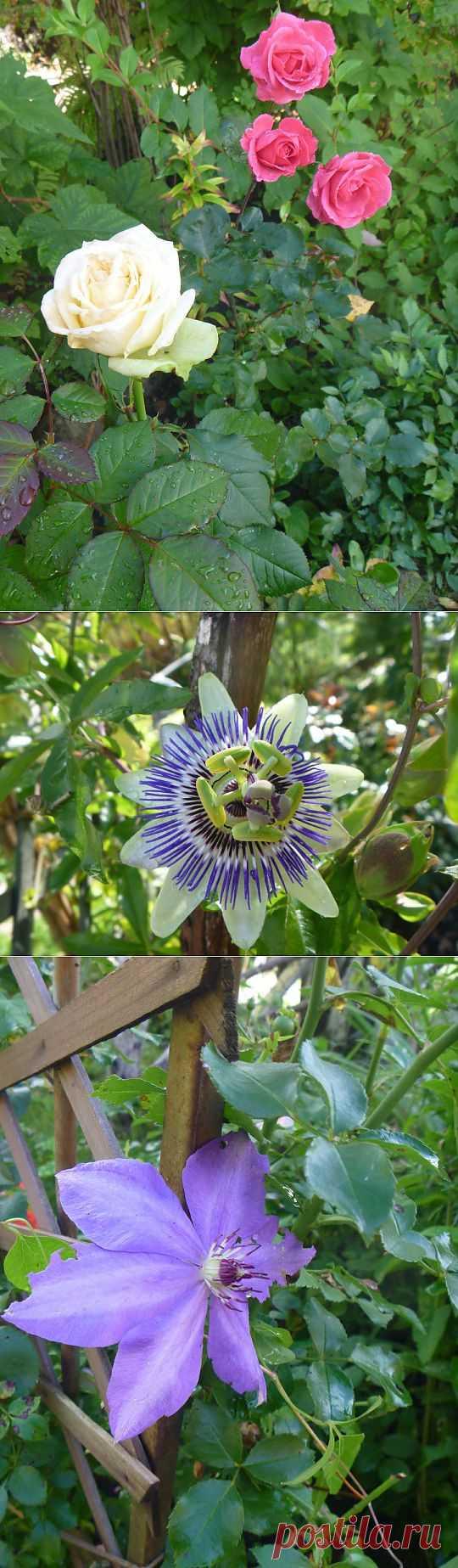 (+1) тема - Последние садовые цветочки   САД НА ПОДОКОННИКЕ