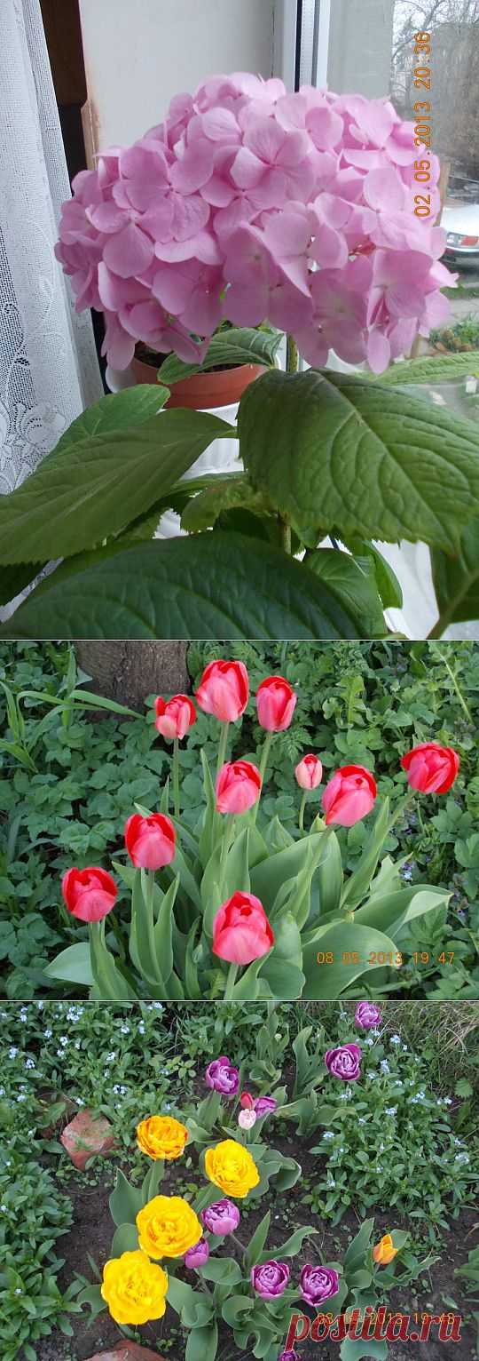 (+1) - Цветы(весенние) | САД НА ПОДОКОННИКЕ