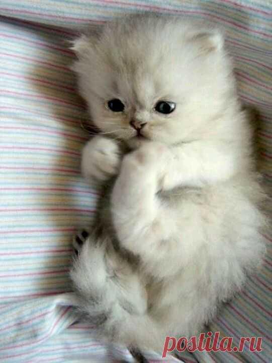 Котенок.