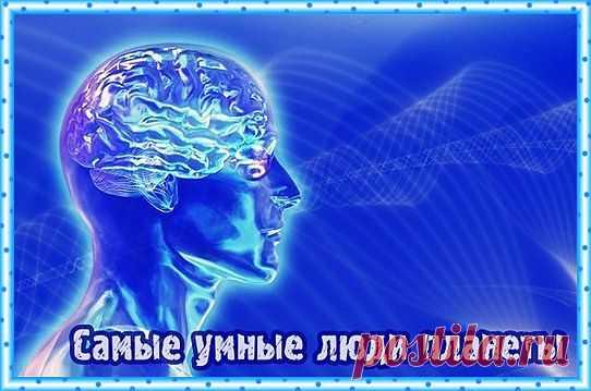 » Самые умные люди планеты Позитивные Новости