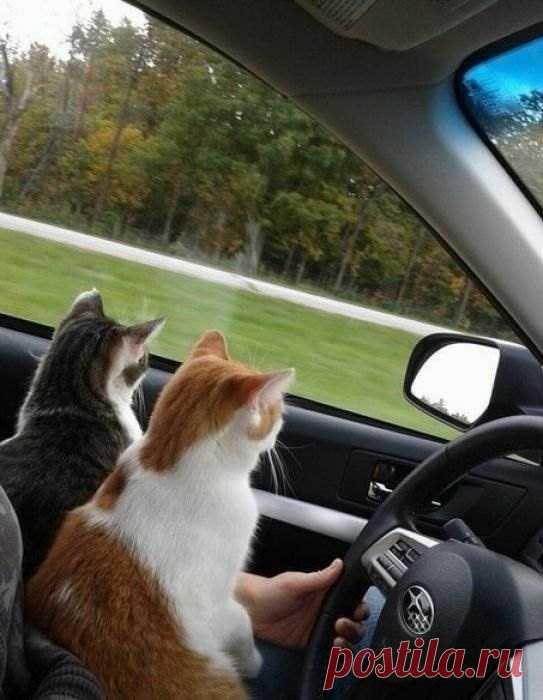 это время открытка кот в машине подборка самых