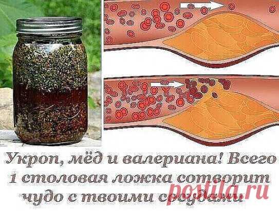 ¡El hinojo, la miel y valeriana! Solamente 1 cuchara creará el milagro con tus vasos.