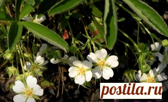 Какие травы полезны для щитовидной железы   Superorehi   Яндекс Дзен
