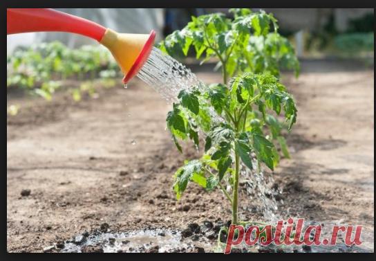 Пиво для вашего огорода | Cоветы агронома | Яндекс Дзен