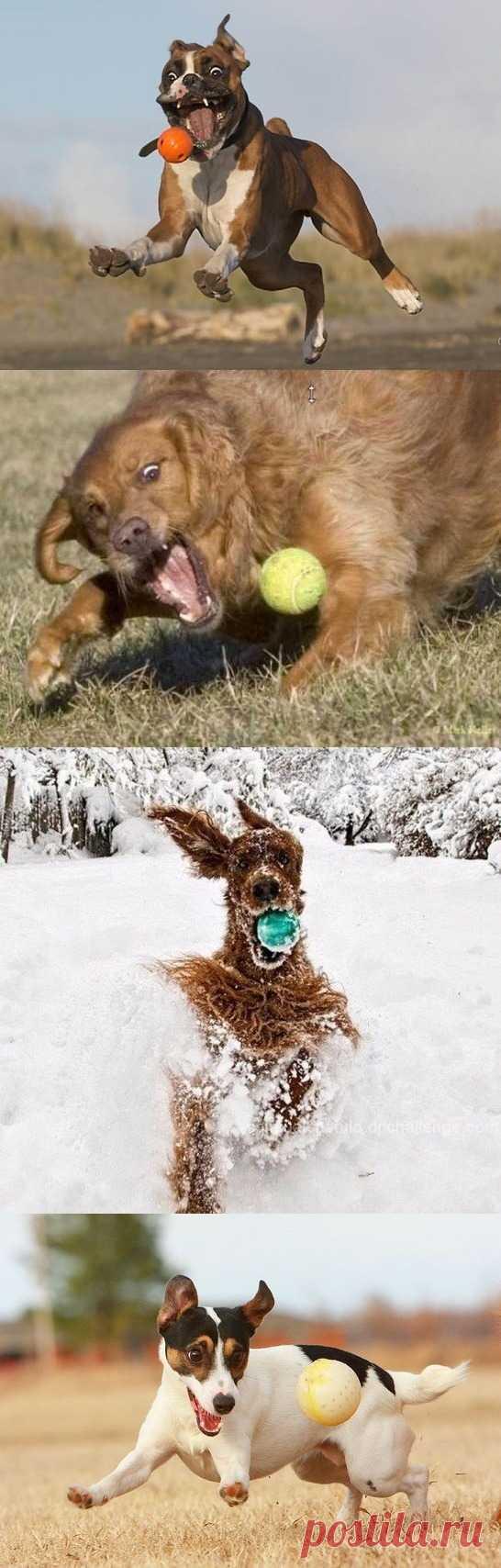 Надо ли играть с собакой и как? По ссылке статья на эту тему