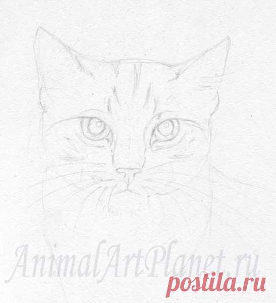 Как нарисовать кота акварельными карандашами и акварелью