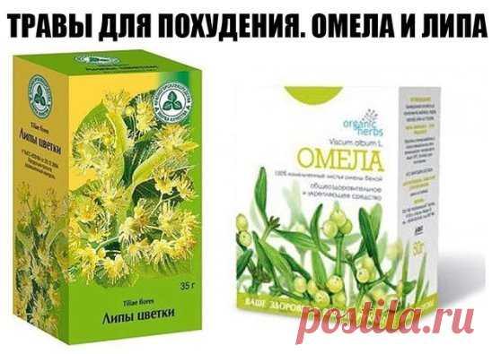 Народная медицина и рекомендации врачей. » похудение с помощью.