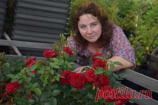 AS I GROW UP ROSES IN SIBERIA