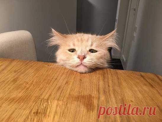 Кот Пончик - как состояние души