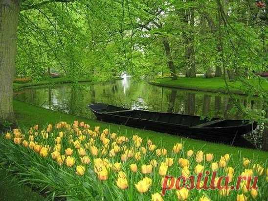Кёкенхоф — всемирно известный королевский парк цветов в Нидерландах