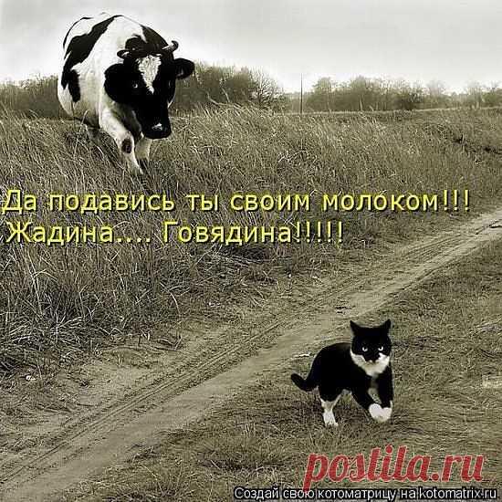 Блоги@Mail.Ru: смешно)))