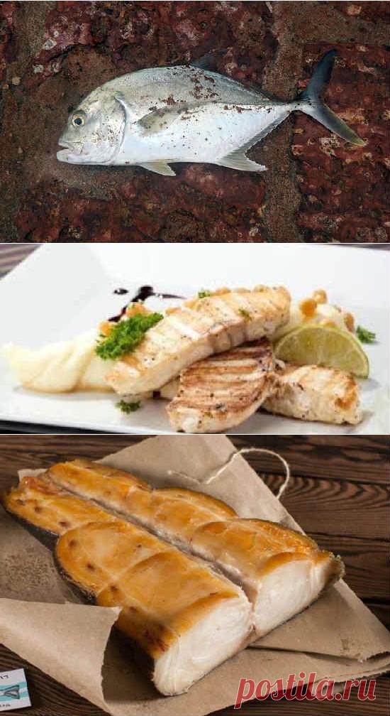 Масляная рыба: польза и вред для организма, беременных, фото