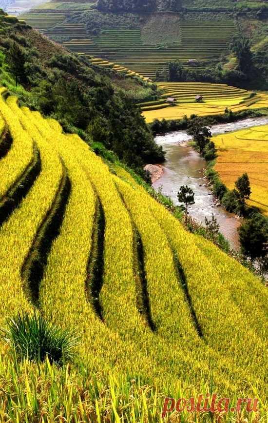 """""""Ступеньки"""" в горах. Это рисовые поля Вьетнама"""