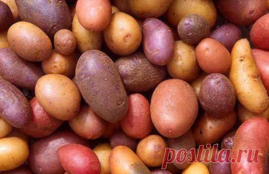 Los hechos interesantes sobre las patatas — los hechos Interesantes