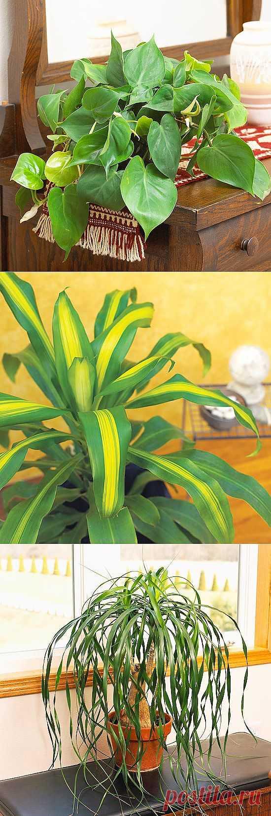 Комнатные растения: неприхотливые, с красивыми листьями и редким поливом.