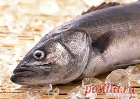 На работу в Дании требуется рабочие в рыбпромышленность - Дания