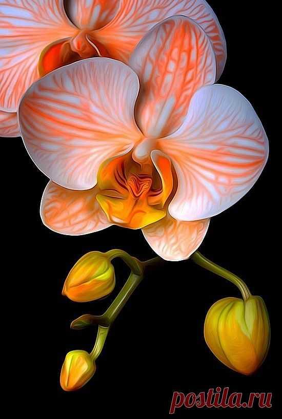 Вертикальные картинки цветы