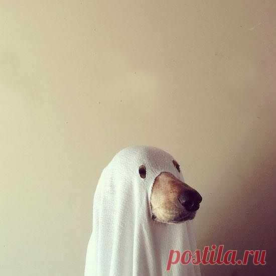 Как подготовить собаку к Хэллоуину :) / Для питомцев / Модный сайт о стильной переделке одежды и интерьера