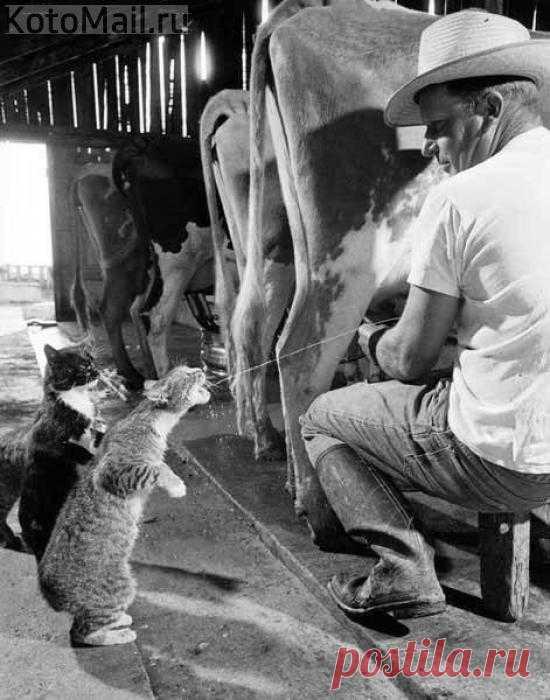Очередь за парным молоком