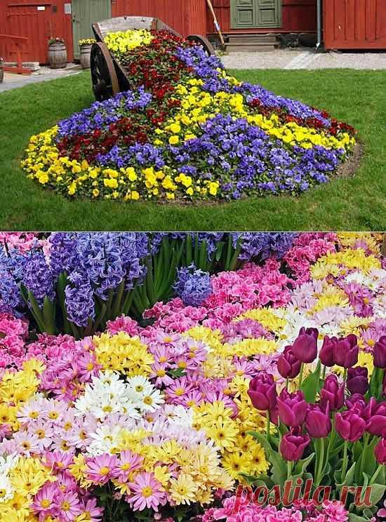 Как посадить клумбу непрерывного цветения?. LiveInternet