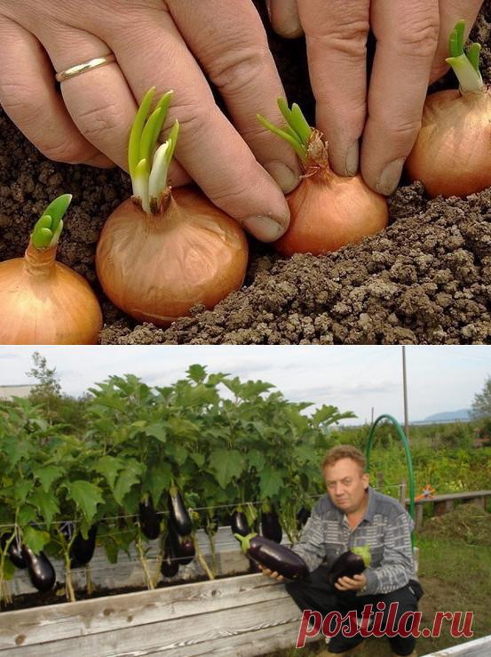 ¡La reunión completa de las astucias de campo para los horticultores!