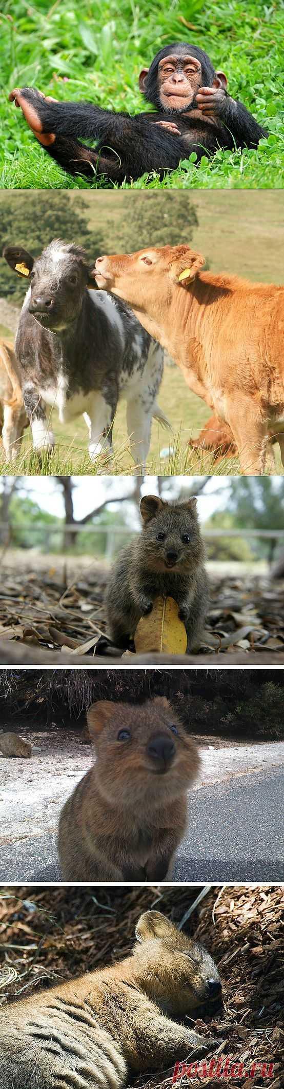 Факты о животных, которые поднимут вам настроение : НОВОСТИ В ФОТОГРАФИЯХ