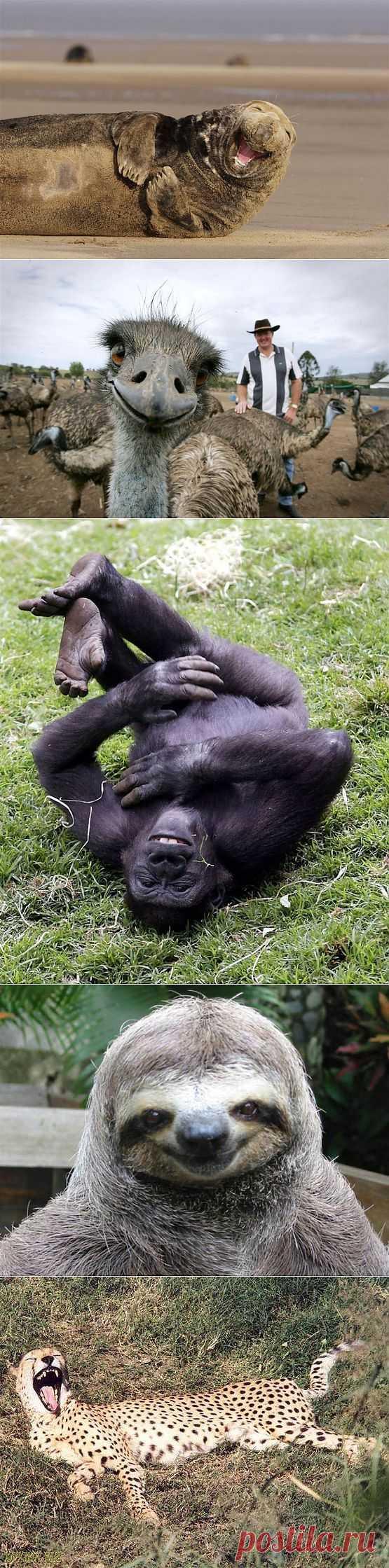 Улыбка в мире животных..:-)).