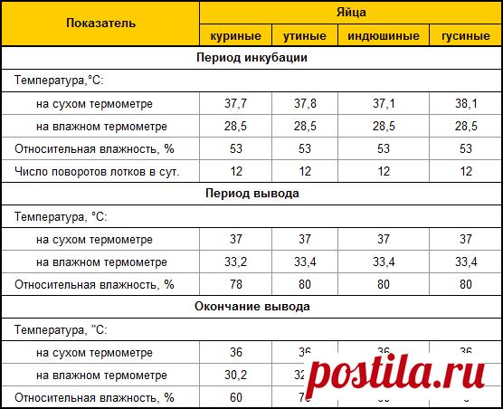 Как вывести индюшат в инкубаторе в домашних условиях — Stoi-angar.ru