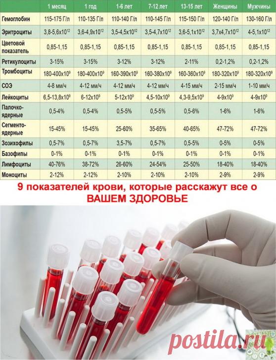 Анализы крови здоровье в тольятти общий анализ цены крови