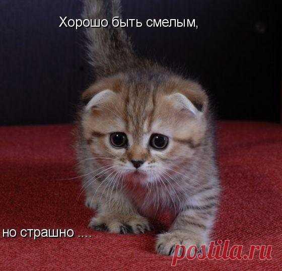 Gallery.ru / СМЕШНАЯ ЖИВОТИНКА!!! - miroslava388