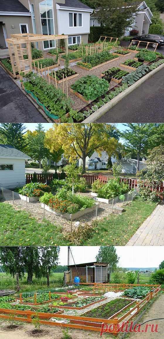 Планируем и делаем огород.