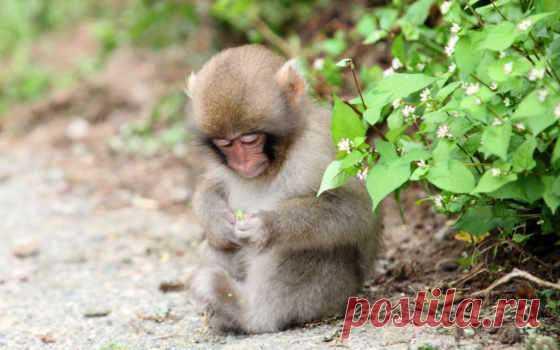 Забавные картинки с животными. Подборка №zabavatut-08040428032020 . Тут забавно !!!