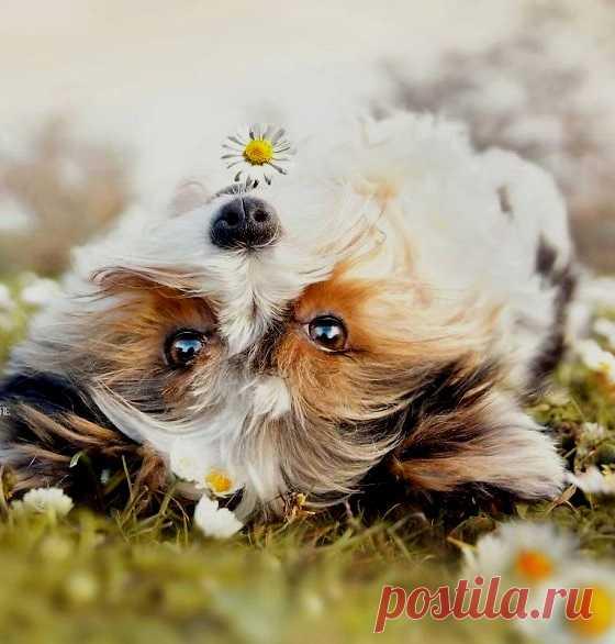 Собака — это не только лучший друг человека, но еще и огромный источник позитива и добрых эмоций.