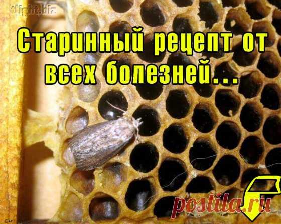 А ВЫ УЖЕ ЗНАЕТЕ, НА ЧТО СПОСОБНА ОГНЕВКА?  Узнайте, как маленький пчелиный паразит улучшает работу сердца, чистит сосуды, выводит мокроту, укрепляет иммунитет, борется с вирусами и служит незаменимым средством в борьбе с туберкулезом!