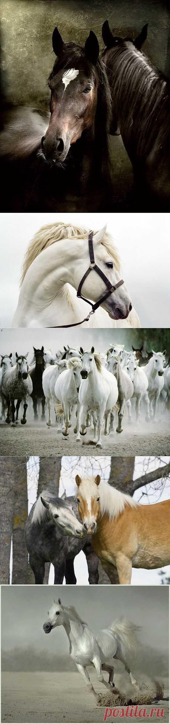 100 великолепных фотографий лошадей.