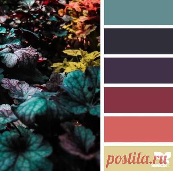 Post from 20.11.2018 | Палитра • Цветовые схемы • Seeds