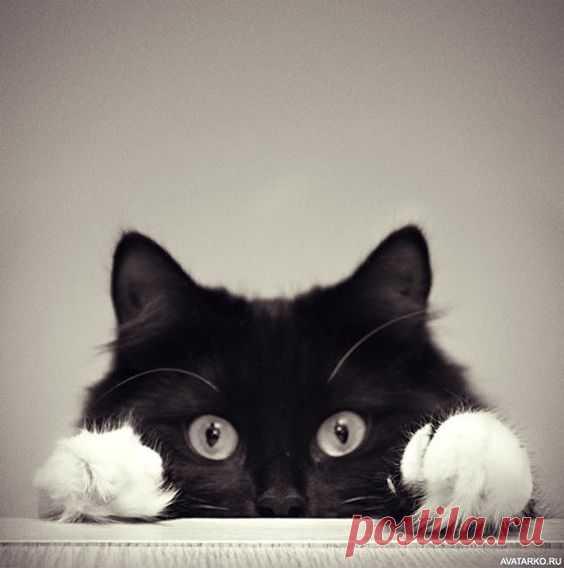 (36) Pinterest