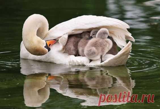 20 трогательных фото, которые доказывают, что животные - хорошие родители