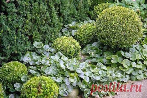 Интересные идеи дизайна сада помогут всем владельцам загородных участков превратить теневое пятно в красивый и цветущий сад. Прохладное тенистое местечко часто становится любимым местом отдыха в…