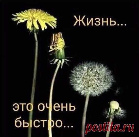 (423) Pinterest