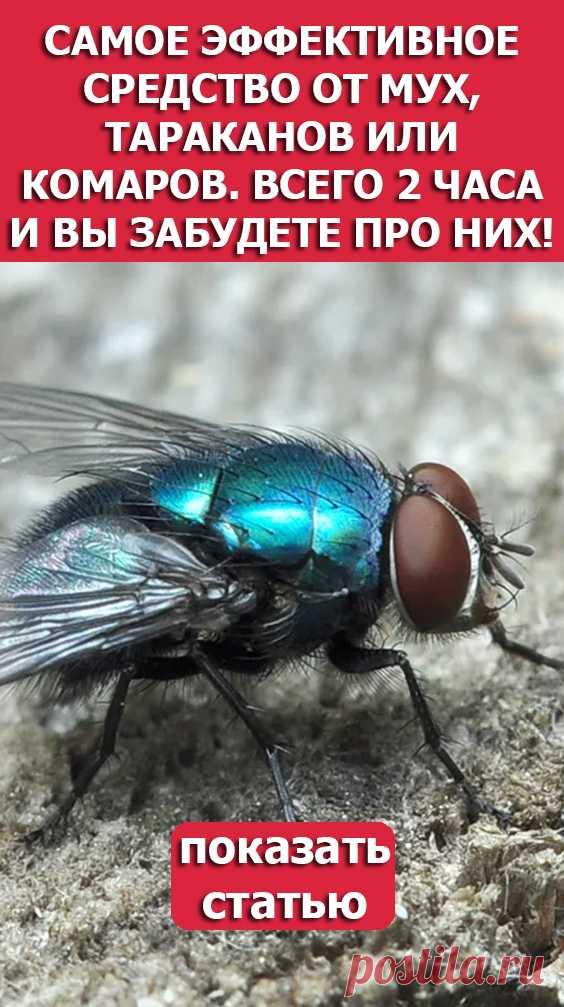 СМОТРИТЕ Самое эффективное средство от мух тараканов или комаров Всего 2 часа и вы забудете про них