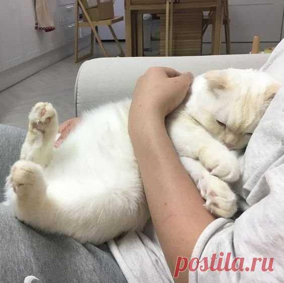 Момент, когда котик пришёл к тебе мурчать - бесценен