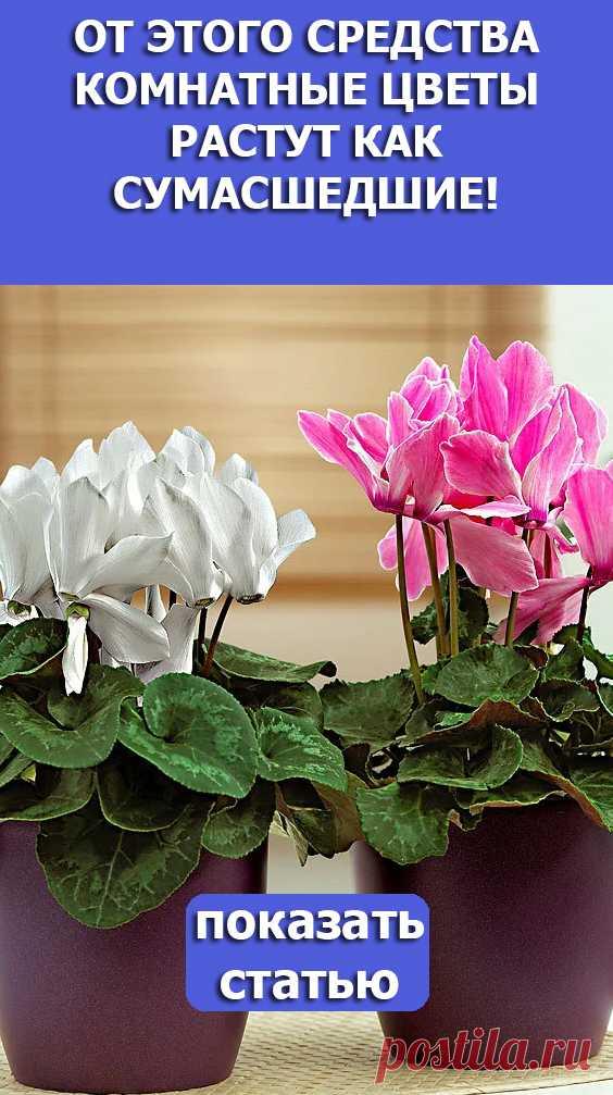 Смотрите! От Этого Средства Комнатные Цветы Растут Как Сумасшедшие!