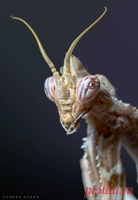 Портреты насекомых, как идеи для фантастики