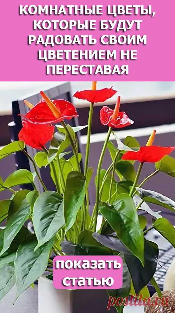 Смотрите! Комнатные цветы, которые будут радовать своим цветением не переставая